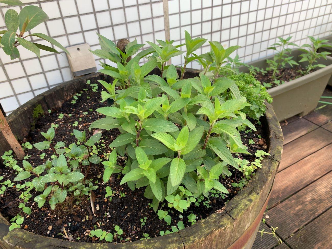 雷の後植物は育つ