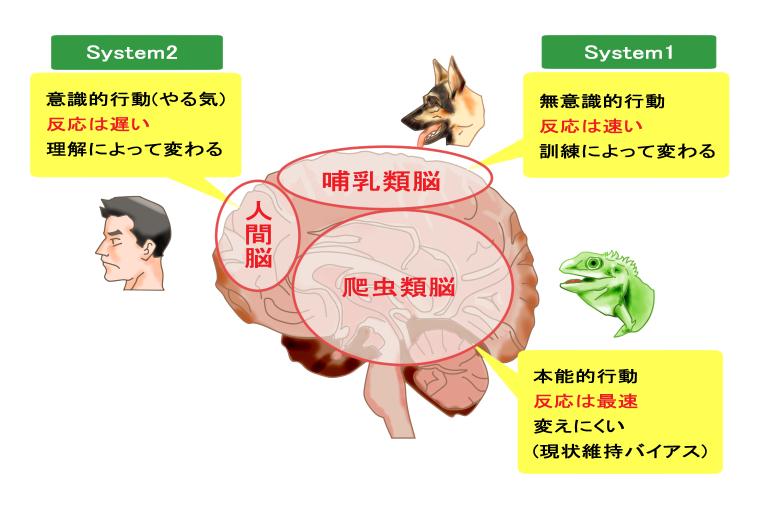 脳の構造(爬虫類脳、哺乳類脳、人間脳)